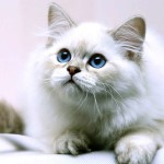 tenero gattino contro guerra